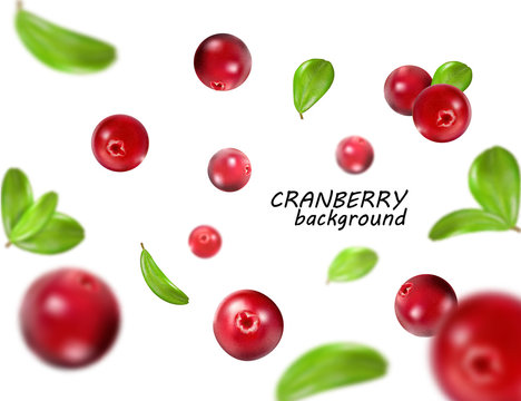 Falling cranberry isolated on white background, full depth of field. Quality realistic vector, 3d illustration