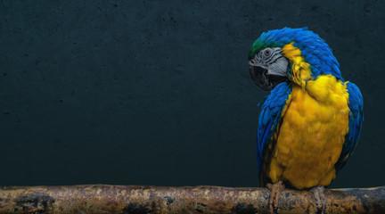 Parrot bird sitting on a branch