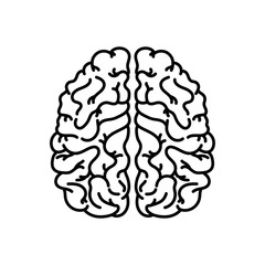 Human brain linear icon. Thin line illustration. Nervous system organ. Contour symbol. Vector isolated outline drawing