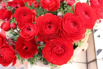 美しい赤い花