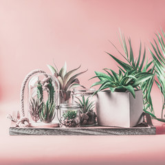 Green house plants arrangement in pots, glass terrarium and jars on table at pastel pink background. Various succulent and cactus plants in glass bowls. Modern indoor plants concept. Copy space.
