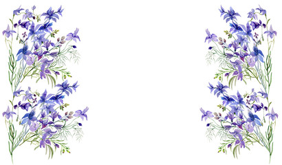 Pattern of wild flowers, watercolor  image  on white background.