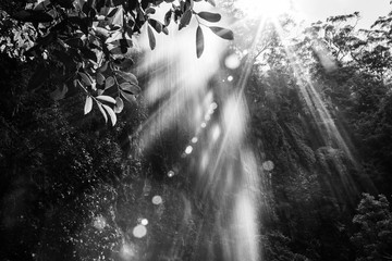 Sunshine with lens flare shining through waterfall in the jungle. Black and white image