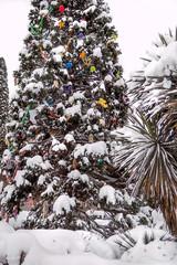 Snowfall in the park