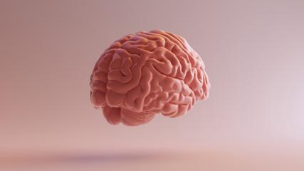 Fototapeta Pink Porcelain Anatomical Brain Back Right 3d illustration 3d render