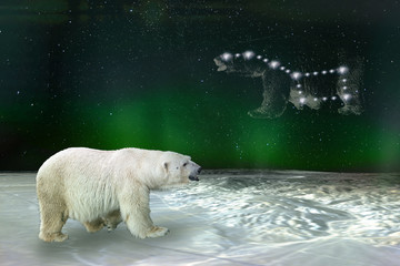 Polar bear and Ursa Major Great Bear constellation. Elements of this image furnished by NASA.