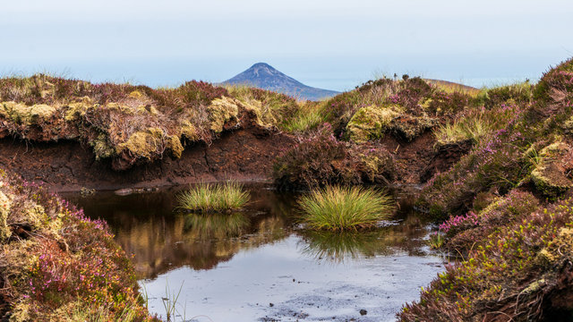 Bog marsh, covered with green grass and purple heather and a large puddle created after the rain, reflecting the sky on Tonduff Mountain peak, in Wicklow Mountains, Ireland.