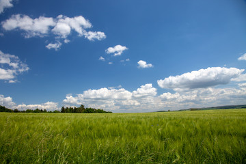 Wheat field in Germany on a nice summer day