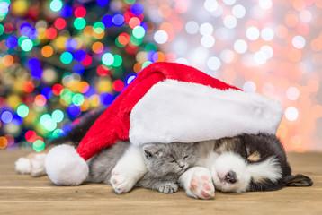 Sleepy australian shepherd puppy hugging kitten in red santa hat