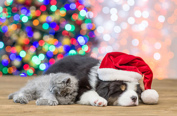 Australian shepherd puppy  in red santa hat and gray baby kitten sleep together with Christmas tree on background