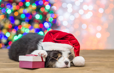 Australian shepherd puppy with red santa hat and gift box sleep with Christmas tree on background. Empty space for text