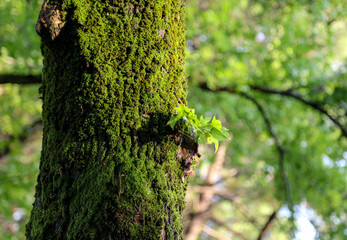 Green moss on a tree in a summer park
