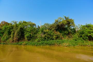River landscape  and jungle,Pantanal, Brazil