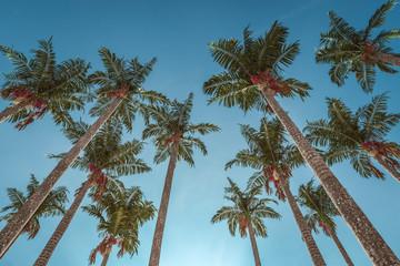 Palm Trees, CGI