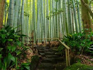 Bambus Hintergrund Weg Ruhe Meditation