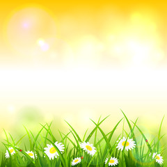 Orange Spring or Summer Nature Background with Grass and Flowers