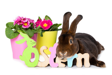Easter rabbit with flowers isolated on white background