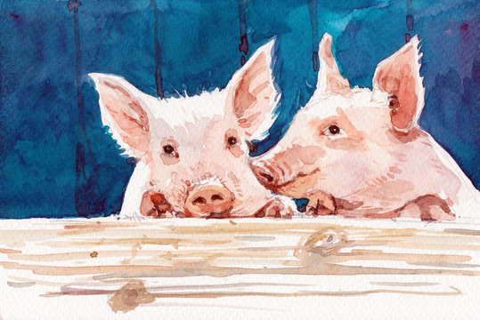 watercolor pig hand drawn