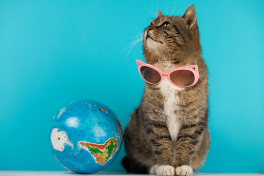 beautiful cat with glasses from the Sun.. journey. rest.