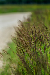 Large grass next to the road.
