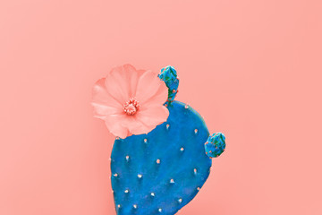 Fashion Cactus with flower on Trendy Living Coral pastel background, Minimal creative style. Fun Summer Sweet coral Mood. Close-up tropical cactus plant. 16-1546