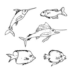 Vector set hand drawn fish. Fish drawing  sketch elements.