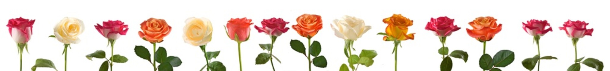 isolated image of flowers closeup