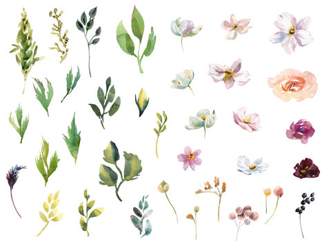 Collection Hand drawing watercolor pink and white flowers for Wedding bridal romanric rustic bouquet. ornament