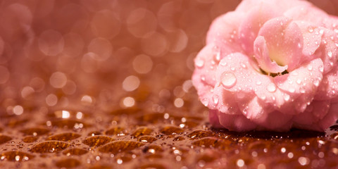 Spring forward, springtime concept - web banner, background of a pink flower with water drops