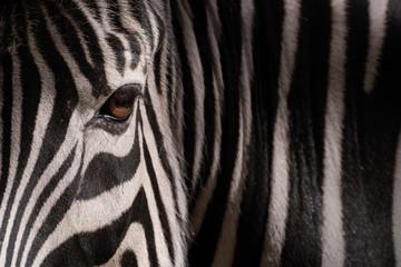 Spoed Foto op Canvas Zebra Ojo de cebra