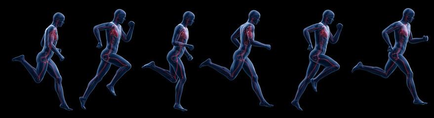 3d rendered illustration of a running mans heart
