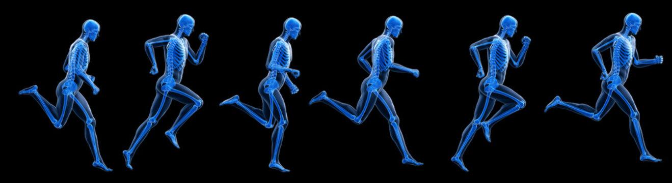 3d rendered illustration of a running mans skeleton.