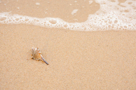 Single shell on the beach