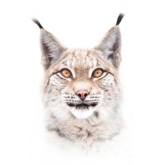 Photo on textile frame Lynx European lynx face isolated on white background