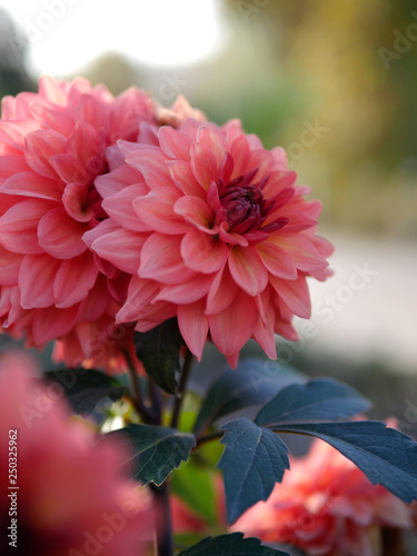 Fleur Rose Stock Photo And Royalty Free Images On Fotolia
