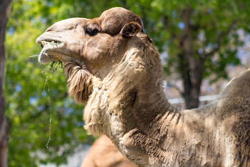 a camel face with green background