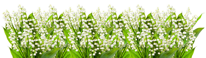 Wall Murals Lily of the valley Lily of the valley isolated on white background