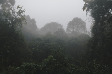 Foggy tropical rainforests, Foggy woods. Nature landscape background.