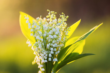 Poster de jardin Muguet de mai bouquet of lilies of the valley in the contrasting light of the setting sun. flowers at sunset