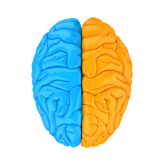 Left and Right Human Brain Anatomy Isolated