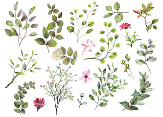 Watercolor botanical collection. Herbs, leaves, flowers.