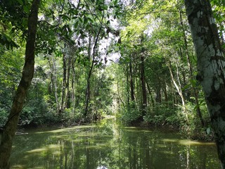 Reflections on the natural rivers, streams in forest.Beautiful forest.