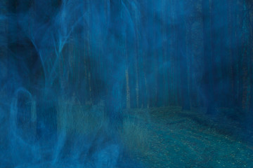 blue mist in the night pine forest with tall trees scary and nobody around the charming atmosphere