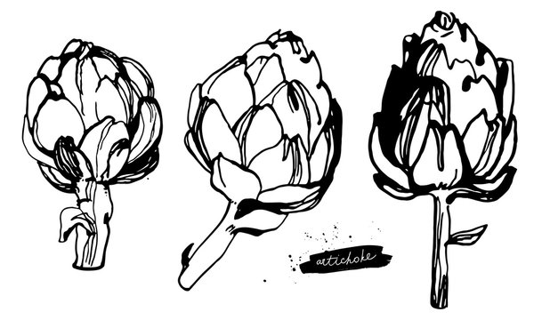 Set of Artichokes. Black and white hand drawn ink sketch. Vegetable illustration