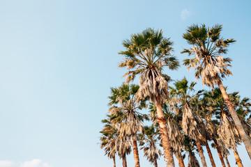 Tropical palm trees at Daepo Jusangjeolli in Jeju Island, Korea