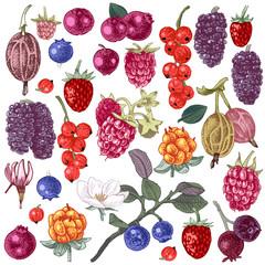 Set of hand drawn berries