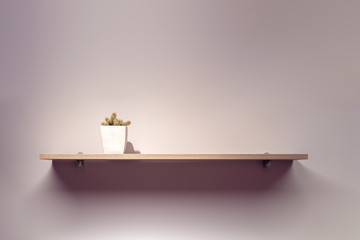 Cactus in a white pot on wooden shelf