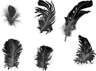 six dark grey feathers on white