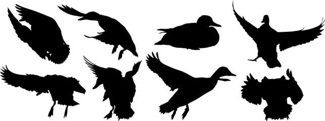 eight ducks black silhouettes on white
