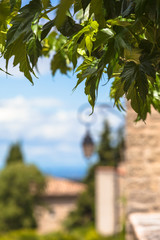 Green Old Town Close Up / Green leaves and old french village background (copy space)